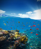 Underwater coral reef with horizon and water waves Stock Image