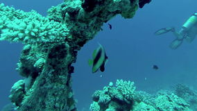 Underwater coral reef  landscape with colourful fish stock video footage