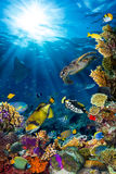 Underwater coral reef landscape. In the deep blue ocean with colorful fish and marine life Royalty Free Stock Photography