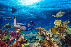 Underwater coral reef landscape snorkling. Young man snorkling exploring underwater coral reef landscape background in the deep blue ocean with colorful fish and Royalty Free Stock Photos