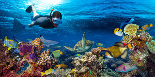 Underwater coral reef landscape snorkling. Young man snorkling exploring underwater coral reef landscape background in the deep blue ocean with colorful fish and Stock Image