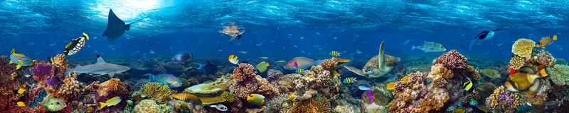 Underwater coral reef landscape. Super wide banner background in the deep blue ocean with colorful fish and marine life