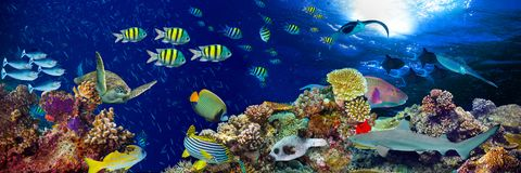 Underwater coral reef landscape wide panorama. Background  in the deep blue ocean with colorful fish and marine life Royalty Free Stock Photography