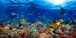 Underwater coral reef landscape wide 2to1 panorama background  in the deep blue ocean with colorful fish sea turtle marine wild
