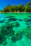 Underwater coral reef next to green tropical island on Moorea. French Polynesia Royalty Free Stock Images