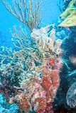 Underwater coral reef off the coast is the island of Bonaire stock photography