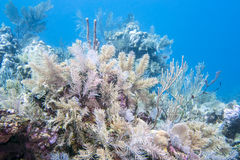 Underwater coral reef Royalty Free Stock Photography
