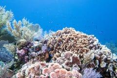 Underwater coral reef Stock Photos