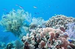 Underwater coral reef. Coral reef off coast of Roatan Honduras Royalty Free Stock Photos