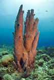 Underwater coral reef Pillar coral Stock Photo
