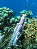 Underwater coral reef Stock Image