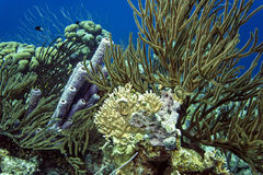 Underwater coral reef purple tube sponge Stock Images