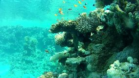 Underwater coral reef red sea. stock footage
