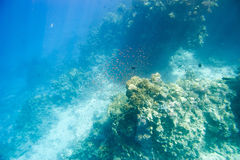 Underwater coral reef. Royalty Free Stock Images