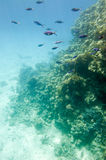 Underwater coral reef. Stock Images