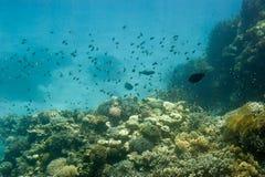 Underwater coral reef. Stock Image