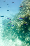 Underwater coral reef. Stock Photography