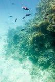 Underwater coral reef. Stock Photos