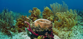 Underwater coral reef Roatan Royalty Free Stock Photos