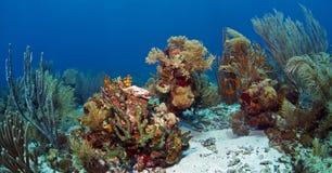 Underwater coral reef Roatan Royalty Free Stock Photo