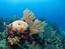 Underwater coral reef Roatan Royalty Free Stock Image