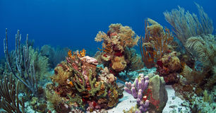 Underwater coral reef Roatan Stock Photography
