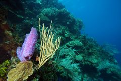 underwater coral reef scene Royalty Free Stock Photography