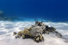 Underwater Coral Reef Scene Royalty Free Stock Photos