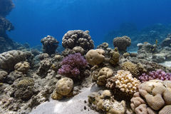 Underwater Coral Reef Scene Stock Photos