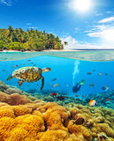 Underwater coral reef with scuba diver and turtle Stock Photos