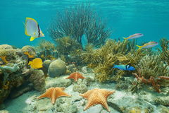 Underwater coral reef starfish and tropical fish Royalty Free Stock Photo