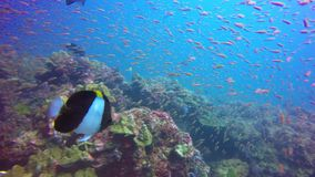 Underwater Coral Reef. Tropical underwater Coral Reef at Andaman Sea, Thailand stock video footage