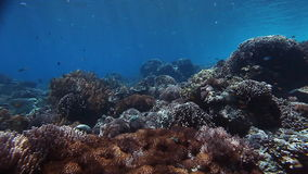 Underwater coral reef. In tropical clear sea stock video