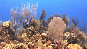 Underwater Coral Reef and Tropical Fish in Bahamas. Amazing, beautiful underwater world Bahamas and the life of its inhabitants, creatures and diving, travels stock video