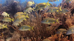Underwater Coral Reef and Tropical Fish in Bahamas stock video footage