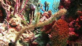 Underwater Coral Reef and Tropical Fish in Bahamas. Amazing, beautiful underwater world Bahamas and the life of its inhabitants, creatures and diving, travels stock footage