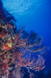 Underwater coral reef Stock Photo
