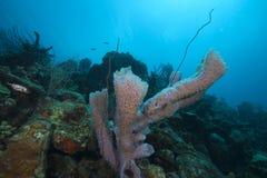 Underwater coral scene, Bonaire Stock Image