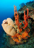 Underwater coral sponges Stock Photography