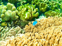 Underwater corals and sponges Stock Images