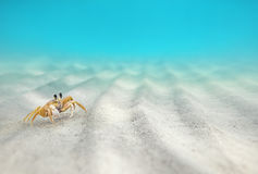 Underwater, Crab On The Sandy Bottom Stock Photos