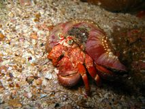 Underwater Creature Stock Photography