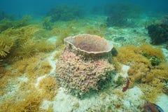 Underwater creature Giant barrel sponge Royalty Free Stock Image