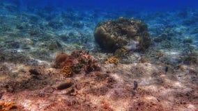 Underwater de pedra Imagens de Stock Royalty Free