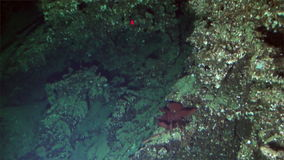 Underwater deep sea mountains from submarine Pacific Ocean Cocos Island. stock video