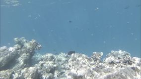 Underwater depths, reefs and fish in the Indian Ocean. Video stock video