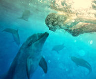 Underwater dialog Royalty Free Stock Image