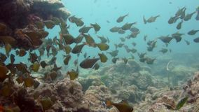 Underwater diving fish. Marine life stock footage