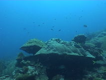 Underwater diving video. Sea life underwater diving video stock video footage