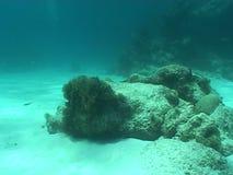 Underwater diving video stock video